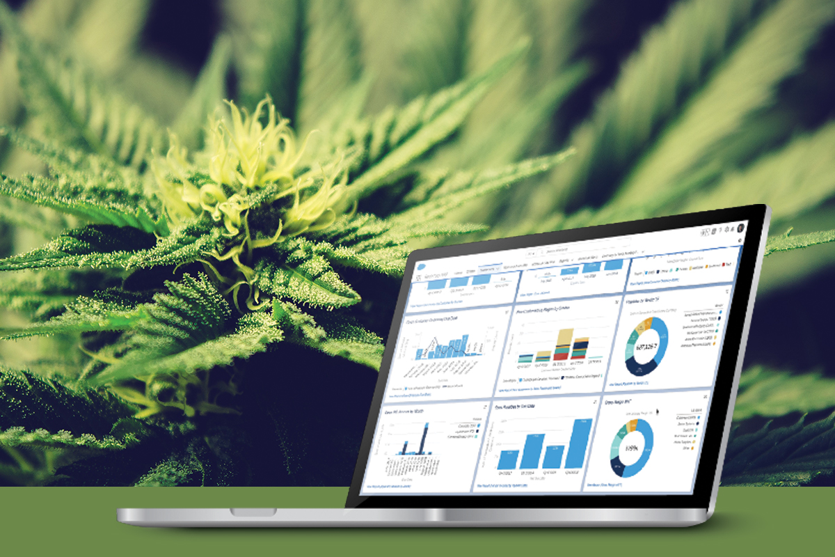 Dramatic Growth Moves Cannabusiness Industry to Cloud ERP